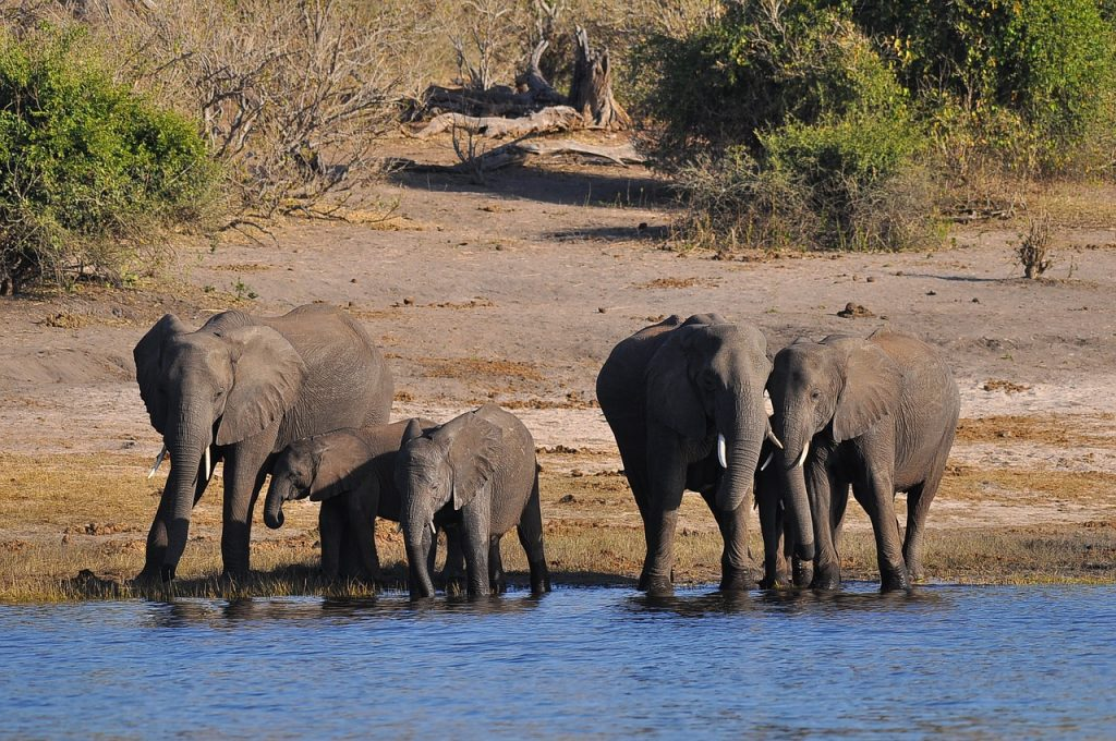 wildlife kayaking destinations africa