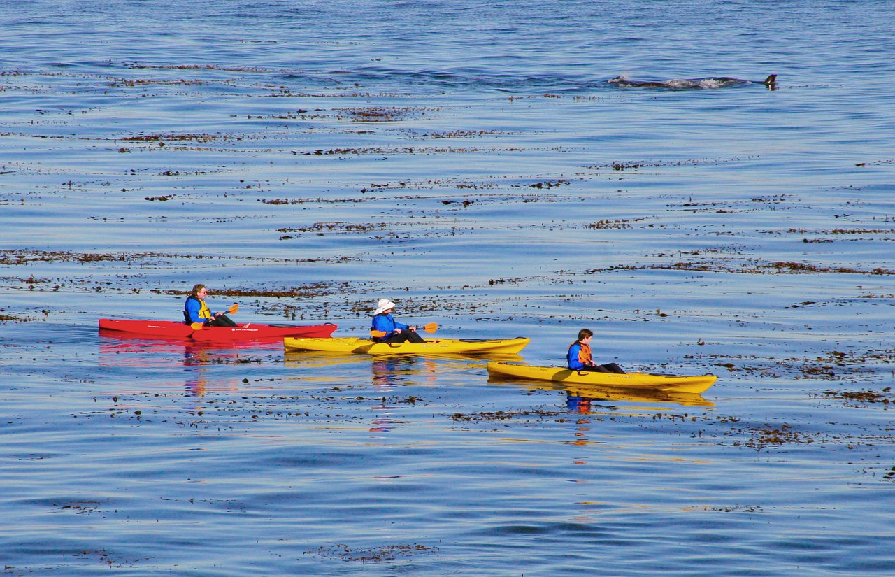 wildlife kayaking destinations feature