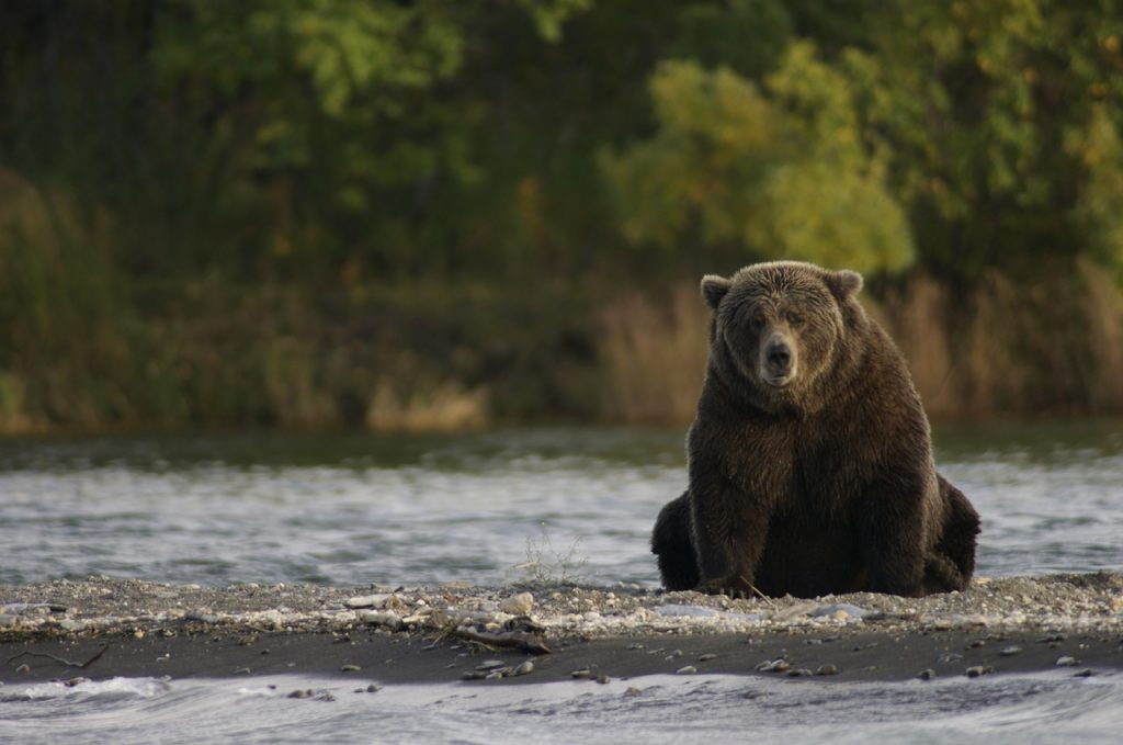 wildlife kayaking destinations katmai