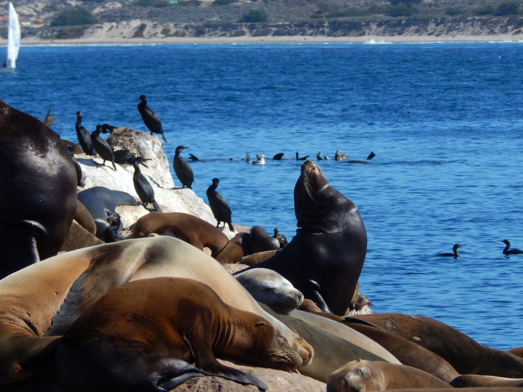wildlife kayaking destinations monterey
